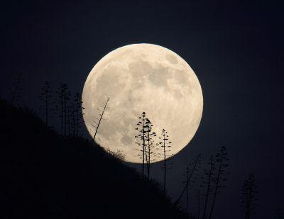 normal xasiotis moon